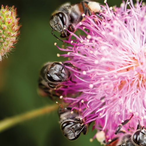 BEE_SQ-01_resize