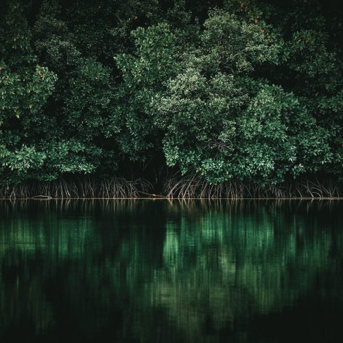 MANGROVE FORESTS_SQ-01